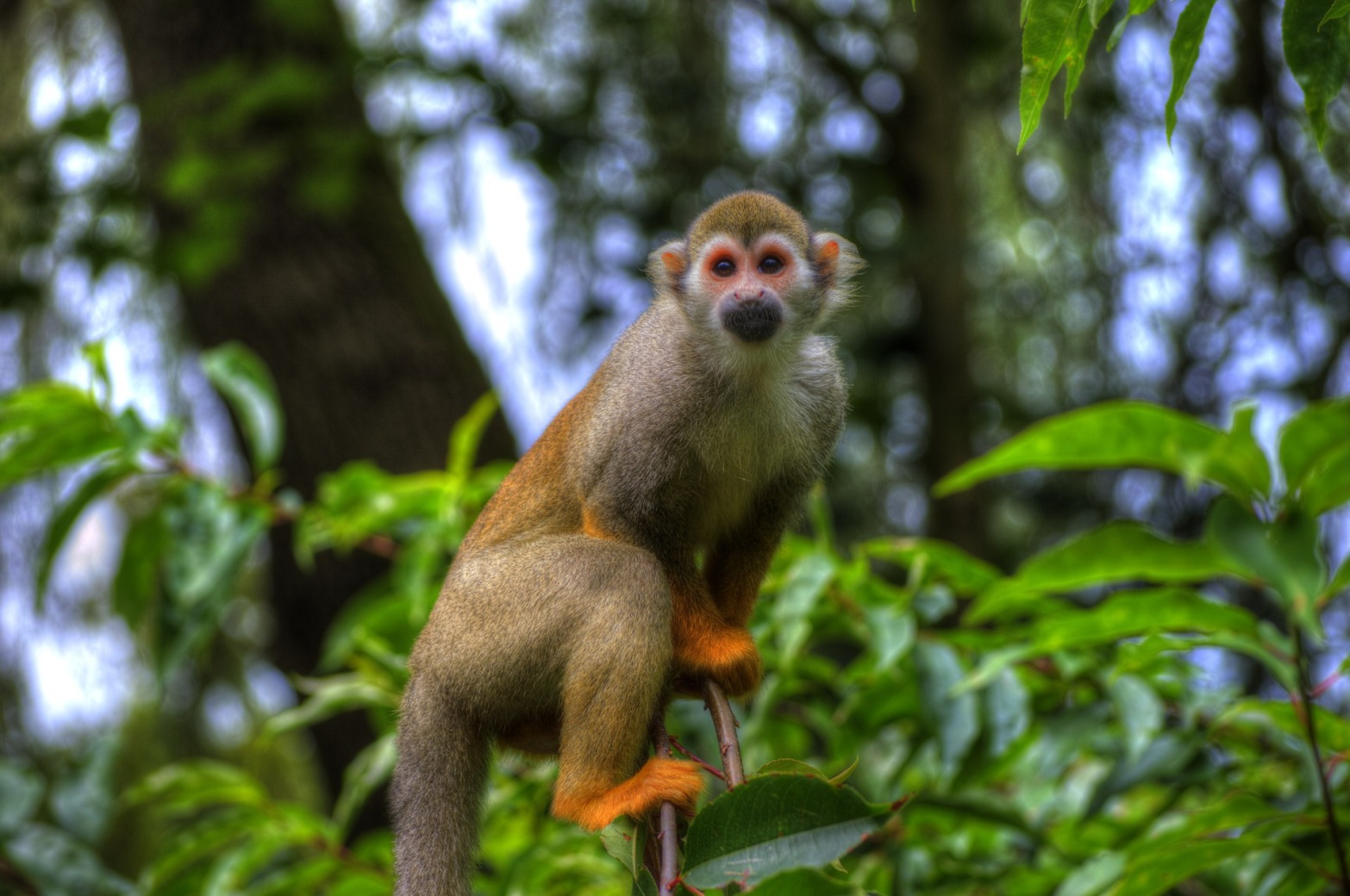 monkey-431796_1920