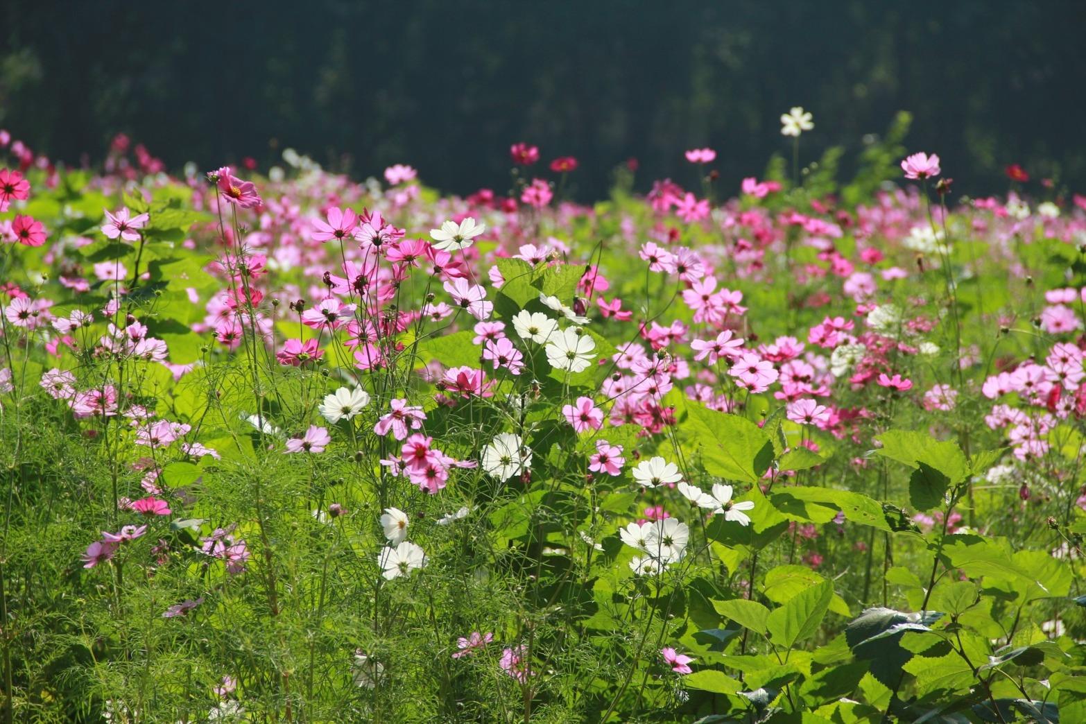 flower-garden-1486941_1920