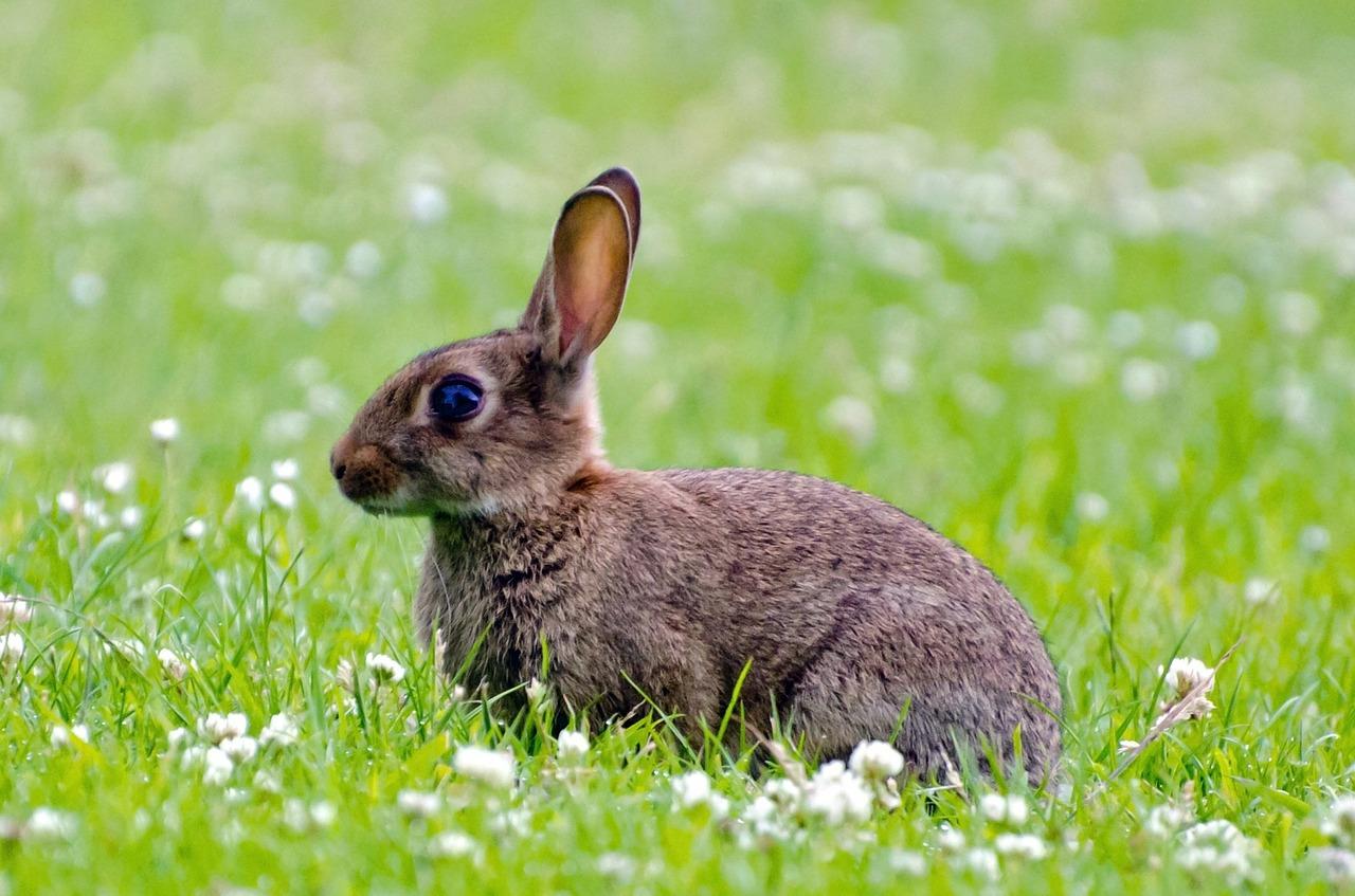 rabbit-214540_1280